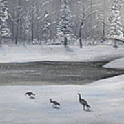 Canadian Geese In Winter Art Print