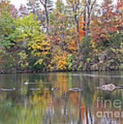Canadian Goose Swimming Through The Autumn Reflections On The Pond Art Print