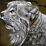 Canadian Lynx Art Print