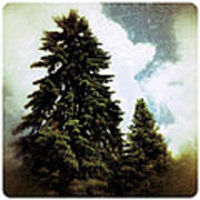 Canadian Pines Art Print