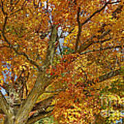 Canadian Tree 2012 Art Print