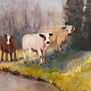 Canal Cows Art Print