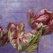 Cancan Parrot Tulips Art Print