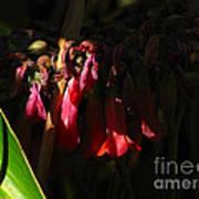 Candelabra  Flower  Art Print