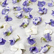 Candied Violets Art Print