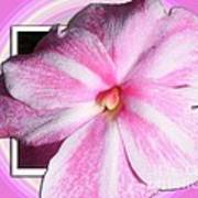 Candy Cane Flower Art Print