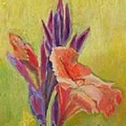 Canna Lily Art Print by Janet Ashworth