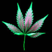 Cannabis Leaf On A Black Background Art Print