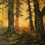Cannock Chase Forest In Sunlight Art Print