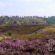Cannock Chase Heather 4 Art Print