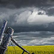 Canola Field In Southern Alberta Art Print