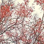 canopy trees II Art Print