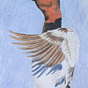 Canvas Back Art Print