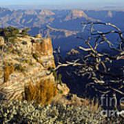 Canyon Foliage Art Print