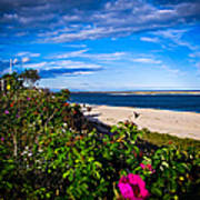 Cape Cod Beach Art Print