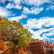 Caprock Canyon Tree Art Print