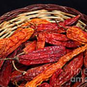 Capsicum Baccatum Chilis Art Print