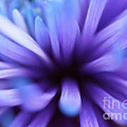 Captivation Print by Inspired Nature Photography Fine Art Photography