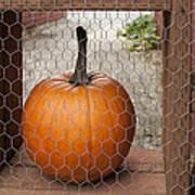Captive Pumpkins Art Print