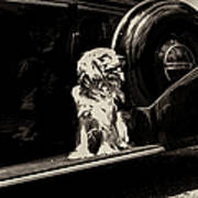 Car And Dog Art Print
