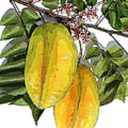 Carambolas Starfruit Two Up Art Print