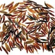 Caraway Seeds Art Print