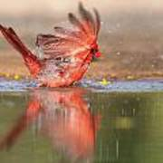 Cardinal Bath 4 Art Print