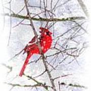 Cardinal Christmas-2014 Art Print
