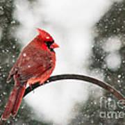 Cardinal In Snow Art Print by Jinx Farmer