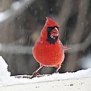 Cardinal In Snowstorm Art Print