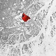 Cardinal In Winter Art Print by Ellen Henneke