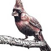 Cardinal Male Art Print