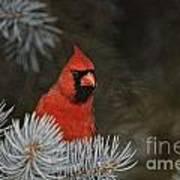 Cardinal Pictures 84 Art Print