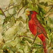 Cardinal Singing Art Print