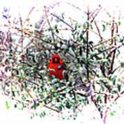 Cardinal Stare Art Print