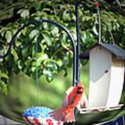 Cardinal Tail Wide Landing Digital Art Art Print