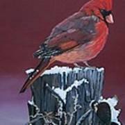 Cardinal Winter Songbird Art Print