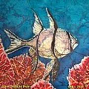 Cardinalfish Art Print