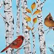 Cardinals Among The Birch-d Art Print