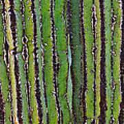 Cardon Cactus Texture. Art Print