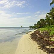 Caribbean Beach In Ambergris Caye Belize Art Print