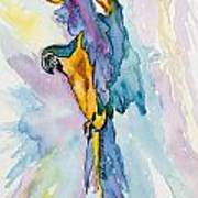 Caribbean Blue Macaw Art Print