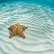 Caribbean Sea Star Art Print