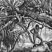 Caripuna Indians With Tapir, From The Amazon And Madeira Rivers, By Franz Keller, 1874 Engraving Art Print