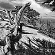Carmel Beach City Park Black And White Art Print
