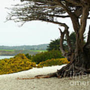 Carmel California Beach Art Print