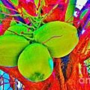 Carmen's Coconuts Art Print