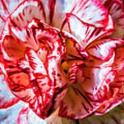 Carnation Watercolor Art Print