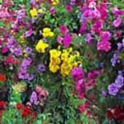 Carnival Flowers Art Print