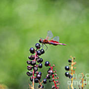 Carolina Saddlebags Art Print